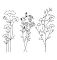 hand drawn of wild flowers isolated on white vector image vector image