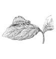 larva of the colorado beetle vintage vector image vector image