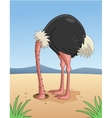 Ostrich hiding head in sand vector image