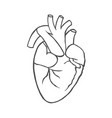 realistic anatomical heart vector image vector image
