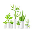 realistic detailed 3d green houseplant pot vector image vector image