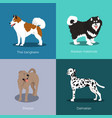 set of dogs different breed vector image vector image