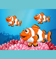 three clownfish under the ocean vector image vector image