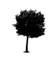 tree 01 vector image vector image