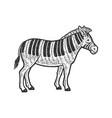 zebra piano line art sketch vector image