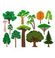 cartoon trees green tree set brachychiton vector image vector image
