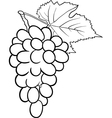 grapes for coloring book vector image vector image