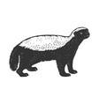 honey badger ratel sketch