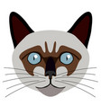 siamese cat avatar cat breeds vector image