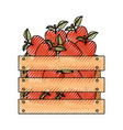 wooden basket with apples in colored crayon vector image