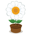 Daisy in a Pot vector image vector image
