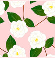 white camellia flower on pink background