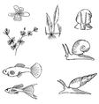 fish sketch vector image vector image