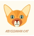 Abyssinian purebred cat portrait vector image
