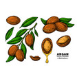 argan drawing organic essential oil sketc vector image vector image