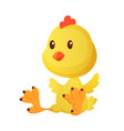 cute little cartoon chick seating isolated on a vector image vector image