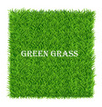 green grass background lawn nature abstract vector image