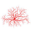 human blood veins red vessels vector image vector image
