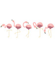 pink flamingos collection isolated elements vector image