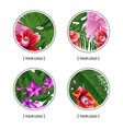 tropical palm leaves and exotic flower vector image