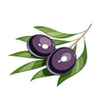 Pair of black olive vector image