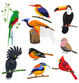 set of flat cartoon tropical exotic birds vector image