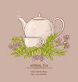 astragalus tea vector image vector image