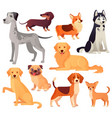 dogs pets character labrador dog golden vector image vector image
