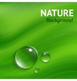 Nature background with transparent water drops vector image vector image