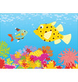 x-ray fish and boxfish vector image
