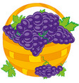 basket with grape vector image vector image
