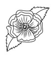 flower petals drawing vector image