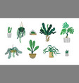 green tropical house plant set isolated vector image vector image