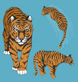 tigers set of vector image