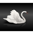 white swan on black water vector image