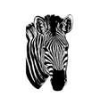 zebra hand drawn graphic on vector image
