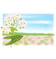 buckwheat vector image vector image