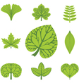 different types leaves vector image vector image