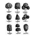 hand drawn tree vector image vector image