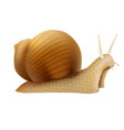 realistic 3d detailed slimy snail with shell vector image vector image