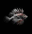 tropical fish portrait of a lionfish on a black vector image vector image