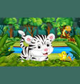 white tiger in the forest vector image vector image