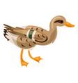 wild duck icon cartoon style vector image