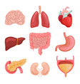 cartoon human body organs healthy digestive vector image