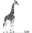 beautiful graceful giraffe vector image vector image