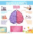 Brain Cerebral Hemispheres Functions Infographic vector image vector image