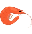 Cooked shrimp on white background vector image