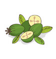 isolate ripe guava fruits or feijoa vector image