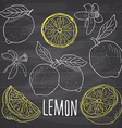 Lemon sketch set Hand drawn doodles lemon fruits vector image vector image