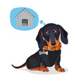 little sad puppy thinks about big wooden doghouse vector image vector image